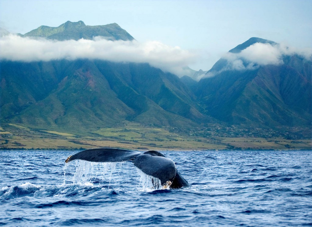 Come To Maui On An Adventure With Tradewinds Vacations