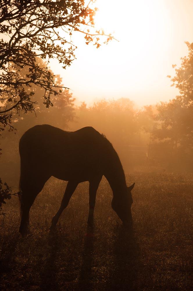 Horseback Riding Vacations in Ireland